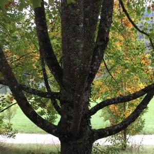 Arboretum und Lac du Joux 086
