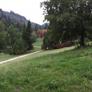 Arboretum und Lac du Joux 088