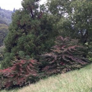 Arboretum und Lac du Joux 089