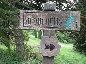 Arboretum und Lac du Joux 095