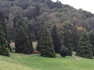 Arboretum und Lac du Joux 096