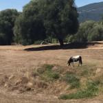In Filitosa (wo bleibt der Cowboy?)